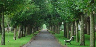 W polskich miastach ubywa parków i terenów zielonych