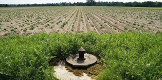 Obrót ziemią rolną po 30 kwietnia będzie jednak możliwy