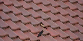 wejście na dach